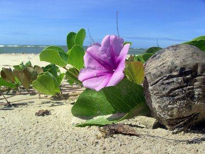 experiencias-de-viagens-flor-na-praia