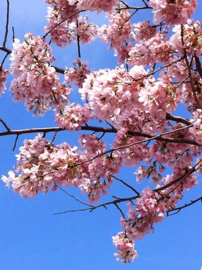 experiencias-de-viagens-cerejeira
