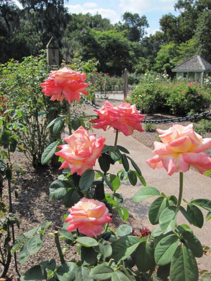 experiencias-de-viagens-harry-p-leu-gardens