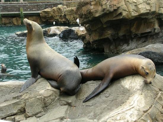experiencias-de-viagens-seaworld-focas