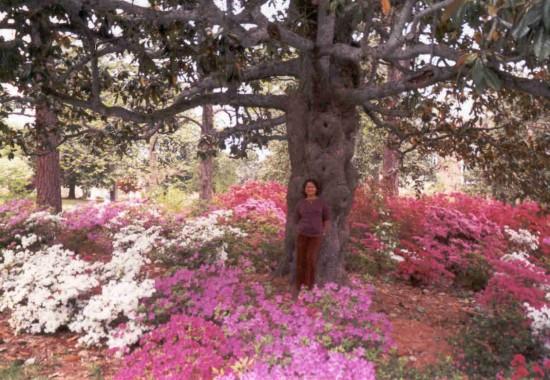 experiencias-de-viagens-louisburg-gardens