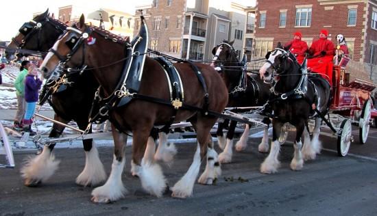 experiencias-de-viagens-williamsburg-Clydesdale-Anheuser-Busch-horse