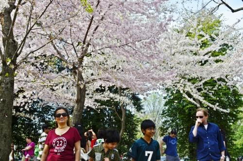 experiencias-de-viagens-washington-festival-cerejeiras