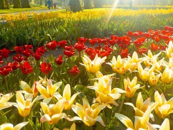 experiencias-de-viagens-amsterdam-keukenhof-flores
