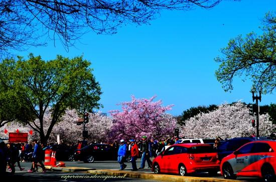 experiencias-de-viagens-cerejeiras