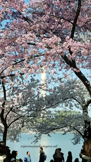 experiencias-de-viagens-cerejeiras-blossom-cherry