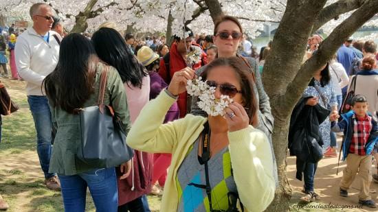 experiencias-de-viagens-cerejeiras-cherry