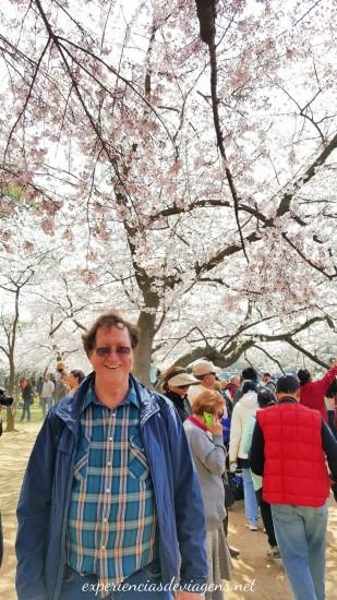 experiencias-de-viagens-cerejeiras-cherry-blossom