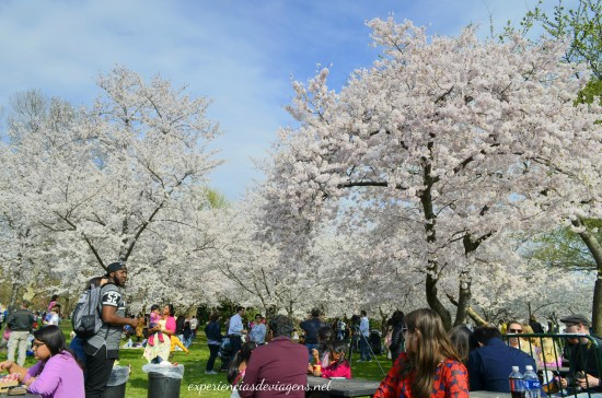 experiencias-de-viagens-cerejeiras-dc-washington
