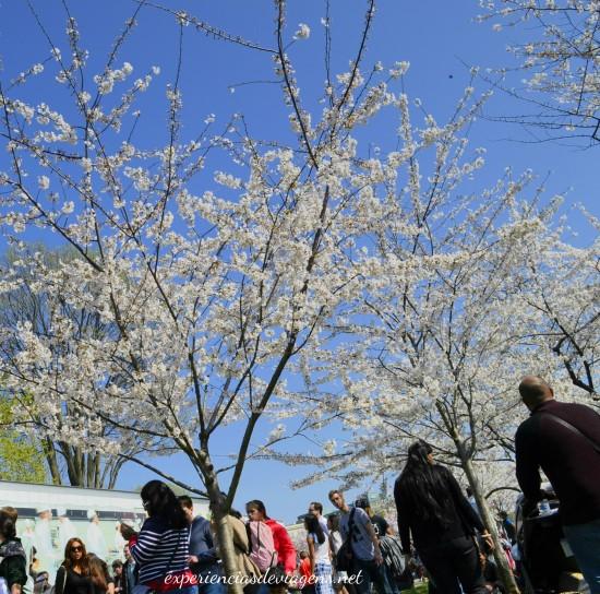 experiencias-de-viagens-cerejeiras-foodtruck