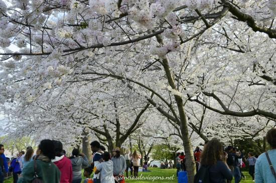 experiencias-de-viagens-cerejeiras-multidao