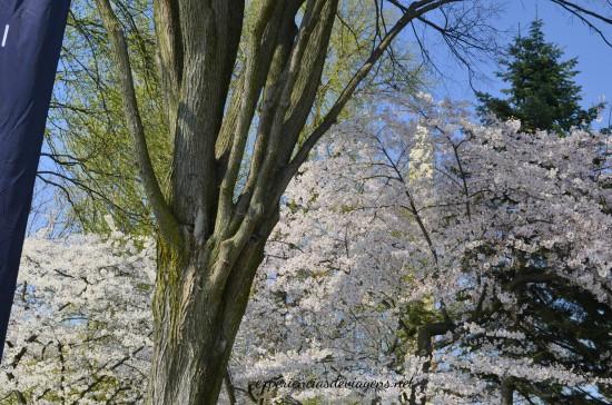 experiencias-de-viagens-cerejeiras-paisagem