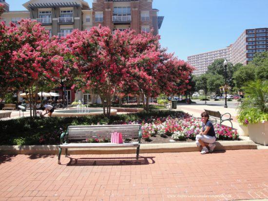 experiencias-de-viagens-dc-streets-flores