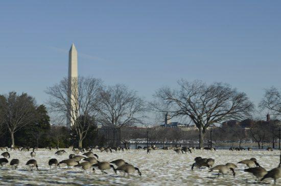 experiencias-de-viagens-dc-winter-patos