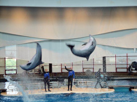 experiencias-de-viagens-baltimore-aquarium-dolphins