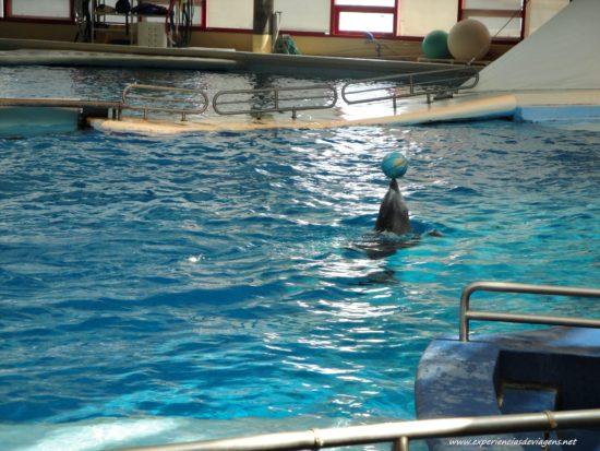 experiencias-de-viagens-baltimore-aquarium-golfinho