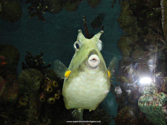 experiencias-de-viagens-baltimore-aquarium-peixe-boca