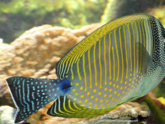 experiencias-de-viagens-baltimore-aquarium-peixe-listrado