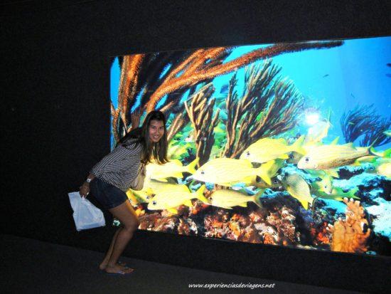experiencias-de-viagens-baltimore-aquarium-peixes