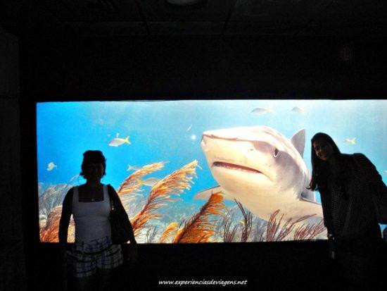 experiencias-de-viagens-baltimore-aquarium-tubarao