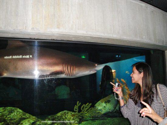 experiencias-de-viagens-baltimore-aquarium-tubarao-bianca