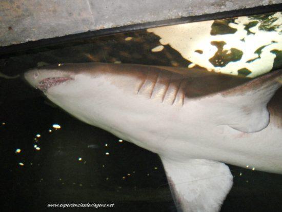 experiencias-de-viagens-baltimore-aquarium-tubarao-frente