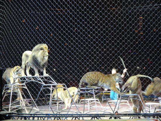 experiencias-de-viagens-baltimore-circo-leoes