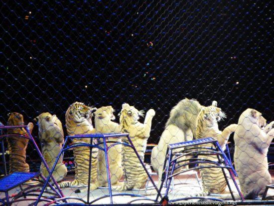 experiencias-de-viagens-baltimore-circo-show-leões