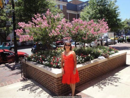 experiencias-de-viagens-alexandria-downtown-summer