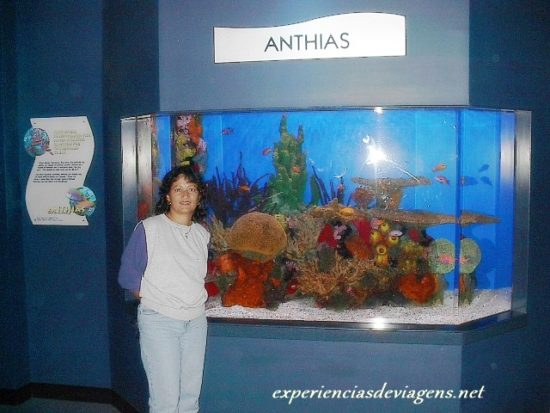 experiencias-de-viagens-gatlinburg-aquarium