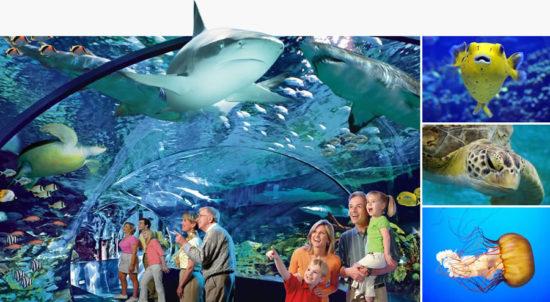 gatlinburg aquarium-collage